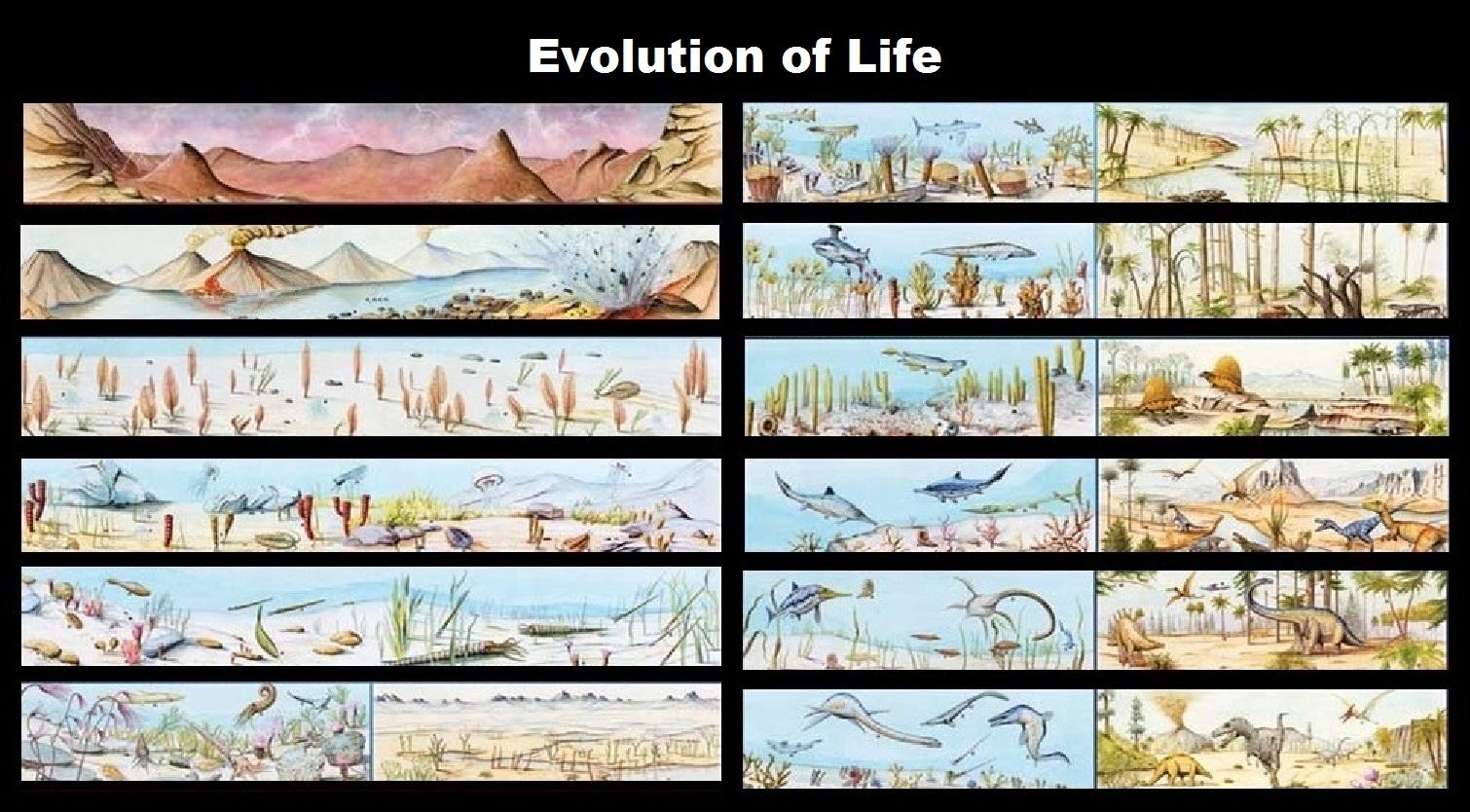 evolution of life - HD1510×834
